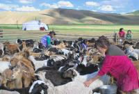 MONGOLIE, Andes -